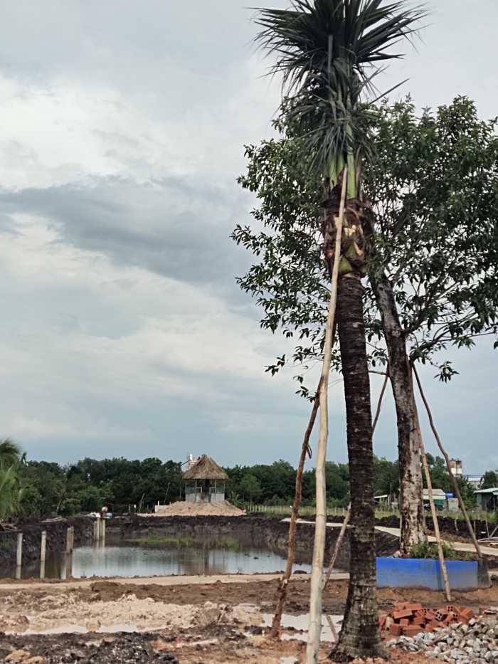 Cây dừa cảnh giá bao nhiêu - MuaBanNhanh