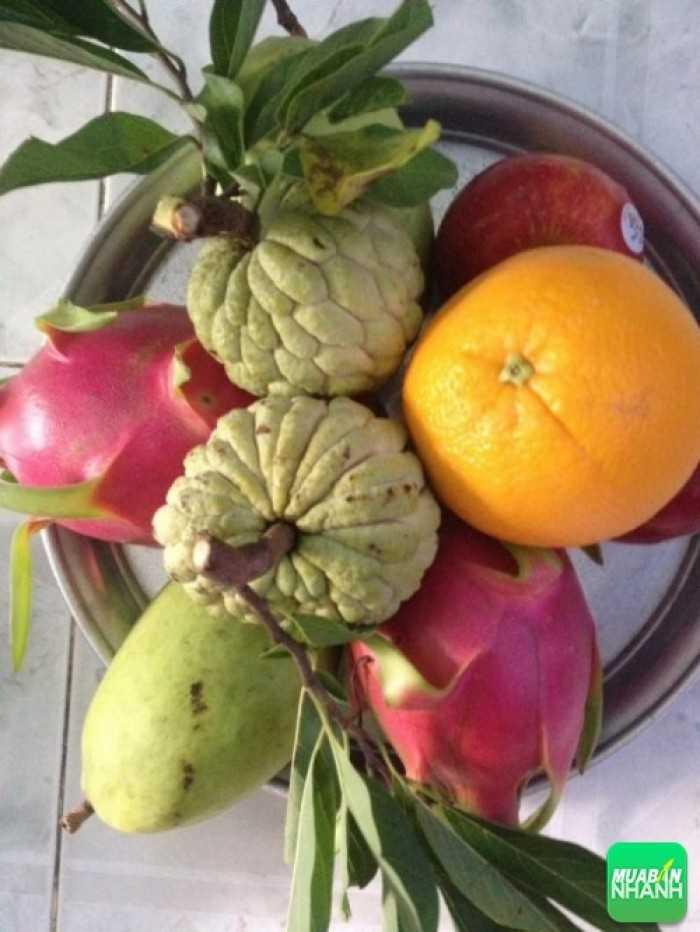 Trái cây cúng rằm Trung Thu - MuaBanNhanh