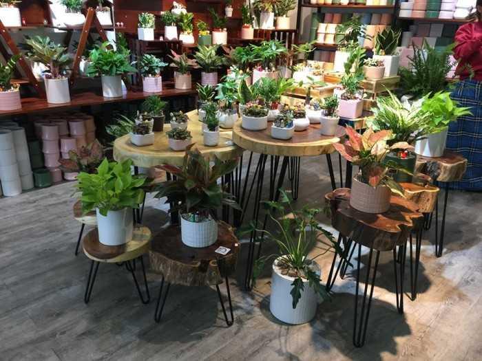 Mặt bàn gỗ tự nhiên chất lượng - MuaBanNhanh