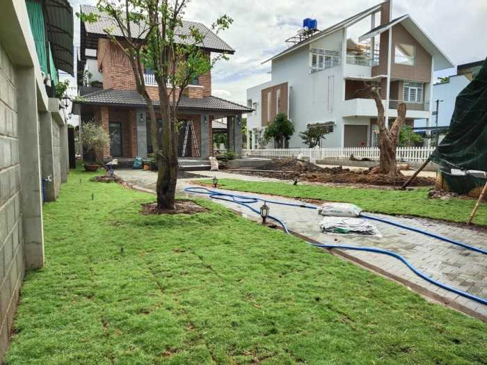trồng cỏ sân vườn