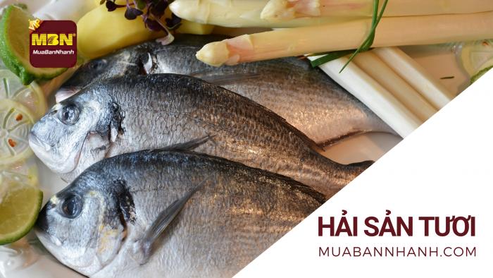Mua bán hải sản tươi sống, đông lạnh - cá, tôm, cua, mực, ốc, sò, ghẹ
