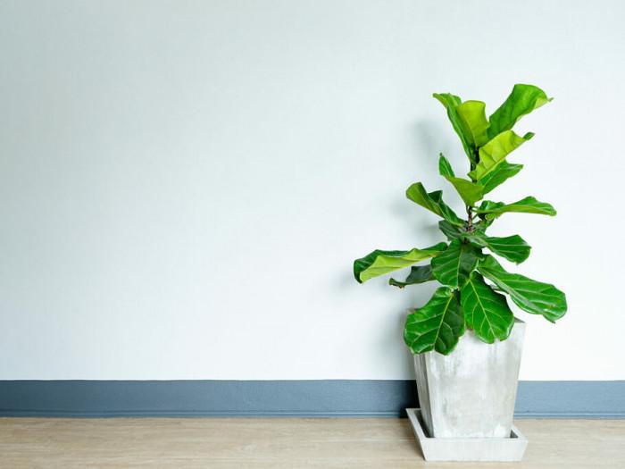 Cây gì trồng trong nhà tốt cho sức khoẻ