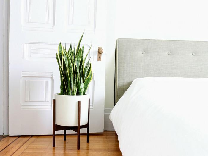 Ý tưởng trồng cây trong nhà, cây trồng trong nhà đẹp nhất