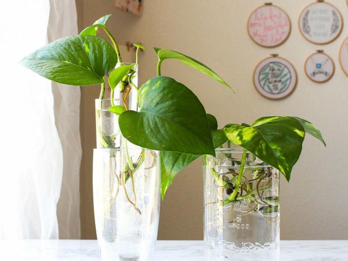 Cây trồng trong nhà tốt cho sức khỏe