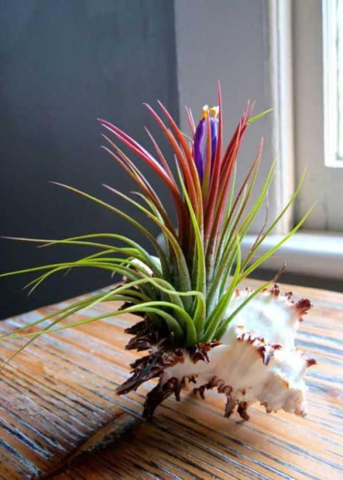 Cây trồng trong nhà dễ sống