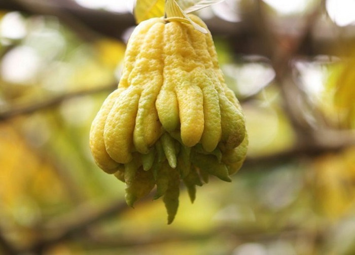 Trái cây chưng bàn thờ
