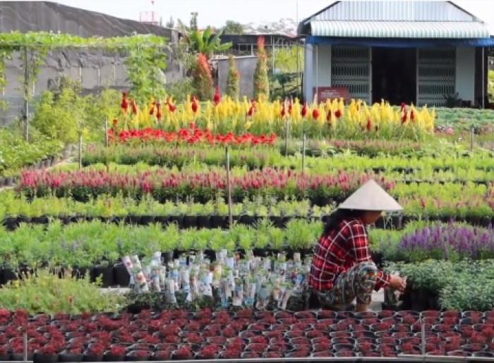 Làng hoa Sa Đéc - làng hoa lớn nhất miền Tây