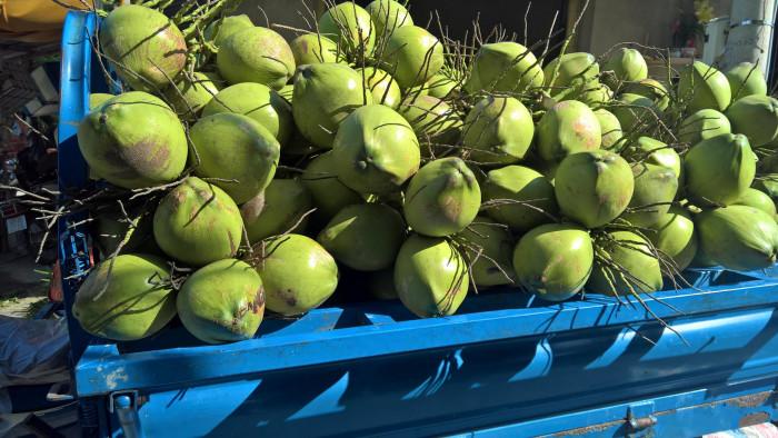 Vựa dừa Tiền Giang - dừa tươi giá sỉ từ chợ đầu mối bán dừa tươi trên MuaBanNhanh - Ảnh: 1