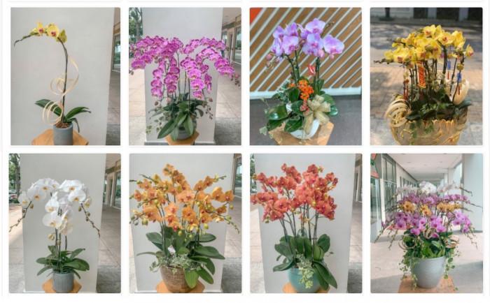 Shop hoa tươi LilyDesign(2)