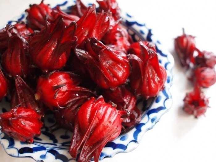 Mua hoa Atiso đỏ ở đâu Hà Nội, hoa Atiso đỏ Đà Lạt