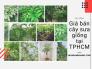 Giá bán cây sưa giống tại TPHCM theo năm tuổi, 4 năm tuổi, 7 năm tuổi, 10 năm tuổi