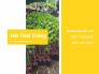 Mít Thái giống, mít Thái siêu sớm da xanh - Giống mít ra quả quanh năm từ nhà vườn trên MuaBanNhanh