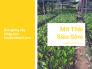 Nhà vườn tư vấn cách chọn cây giống mít Thái siêu sớm, mít Thái thơm, mít Thái ruột đỏ ra quả quanh năm