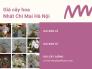 Giá cây hoa nhất chi mai Hà Nội - Mua nhất chi mai ở Hà Nội từ nhà vườn trên MuaBanNhanh