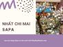Giá cây hoa nhất chi mai Sapa - cây mai trắng Sapa từ nhà vườn trên MuaBanNhanh