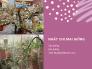 Mua bán cây nhất chi mai giống, hạt giống nhất chi mai TPHCM trên MuaBanNhanh