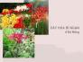 Tìm mua hạt giống hoa bỉ ngạn Đà Nẵng từ nhà vườn trên MuaBanNhanh - Nơi bán hạt giống hoa bỉ ngạn chất lượng