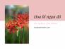 Đặt mua giống hoa bỉ ngạn đỏ từ vườn ươm trên MuaBanNhanh - Hoa bỉ ngạn trồng như thế nào? Cách nhân giống hoa bỉ ngạn