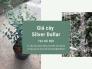 Giá cây silver dollar Hà Nội - Tư vấn cách trồng và chăm sóc cây đô la từ nhà vườn trên MuaBanNhanh