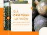 Giá cam sành mua tại vườn, mua cam sành giá sỉ từ nhà vườn chính vụ - mùa cam sành miền Tây vào tháng mấy?