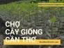 Chợ cây giống Cần Thơ - Danh sách vườn cây giống tại Cần Thơ