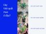 Cây việt quất mua ở đâu? Nhà vườn bán cây việt quất con, cây việt quất giống có trái trên MuaBanNhanh