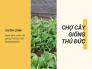 Chợ cây giống Thủ Đức - Danh sách vườn cây giống Thủ Đức trên MuaBanNhanh