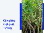 Bán cây việt quất tứ quý trái quanh năm trồng được ở Việt Nam từ chợ cây giống MuaBanNhanh