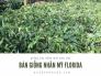 Bán giống nhãn Mỹ Florida - giống cây nhãn mới siêu trái từ vườn ươm trên MuaBanNhanh