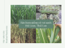 Bán hom giống cỏ voi xanh Đài Loan, Thái Lan - Năng suất và kỹ thuật trồng tư vấn từ MuaBanNhanh