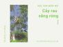 Cây rau sắng rừng - đặc sản dân tộc miền Núi trên MuaBanNhanh