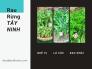 Mua rau rừng ở đâu TPHCM - Bán rau rừng Tây Ninh giá sỉ, cung cấp rau rừng TPHCM