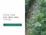 Địa chỉ bán cây mác mật TPHCM trên MuaBanNhanh
