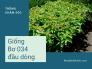 Mua giống cây bơ 034 đầu dòng - Kinh nghiệm trồng, chăm sóc vườn cây giống bơ 034