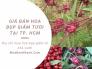 Giá bán hoa bụp giấm tươi ở TPHCM - Địa chỉ mua đài hoa bụp giấm từ nhà vườn trồng chuyên canh