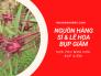 Nguồn hàng sỉ & lẻ hoa bụp giấm khô trực tiếp từ nhà vườn trồng, vựa thu mua hoa bụp giấm Bình Thuận, Lâm Đồng, Sapa