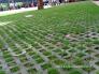 Các giống cỏ chịu bóng râm dễ trồng tạo thảm nền trong sân biệt thự, công viên, sân chơi, khu nghỉ mát, giải trí