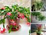 Top 20 cây trang trí trồng trong nhà không cần tưới nước, ít tốn công chăm sóc thường xuyên vẫn sống