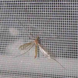 Cửa Lưới Chống Muỗi, Côn Trùng Loại Nào Tốt? Các Mẫu Cửa Lưới Chống Muỗi Mới Nhất Và Báo Giá Cửa Lưới Chống Muỗi