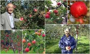 Chấn động Nhật Bản: Người nông dân mất 11 năm để trồng được và tạo nên kỳ tích
