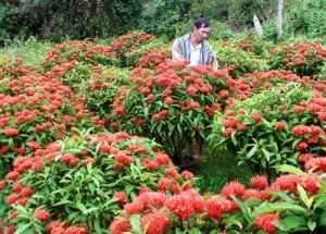 Hoa Mẫu đơn ta ( truyền thống ),ý nghĩa hoa mẫu đơn,mẫu đơn đỏ