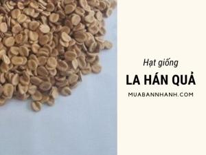 Mua hạt giống la hán quả nhận tư vấn quy trình trồng cây la hán quả từ nhà vườn ươm giống trên MuaBanNhanh