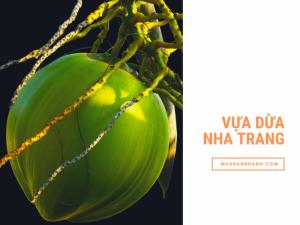 Vựa dừa Nha Trang thương hiệu dừa xiêm Ninh Hòa, Ninh Đa từ Tổ liên kết dừa xiêm xanh Vạn Thiện trên MuaBanNhanh