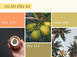 Vựa dừa Đồng Nai - đại lý, nhà phân phối dừa xiêm, dừa khô và dừa ta Biên Hòa, Trảng Bom