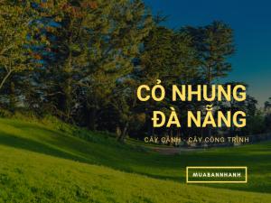 Mua cỏ nhung Nhật ở Đà Nẵng - thảm cỏ tự nhiên cho khách sạn, nhà hàng, sân golf