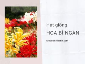 Mua bán hạt giống hoa bỉ ngạn TPHCM từ nhà vườn trên MuaBanNhanh - Cách trồng hoa bỉ ngạn bằng hạt