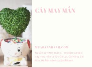 Nguồn cây may mắn sỉ - chuyên trang sỉ cây may mắn tài lộc Đà Lạt, Đà Nẵng, Sài Gòn, Hà Nội trên MuaBanNhanh