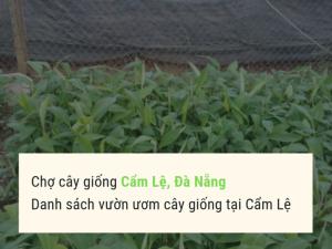 Chợ cây giống Cẩm Lệ, Đà Nẵng - Danh sách vườn ươm cây giống tại Cẩm Lệ