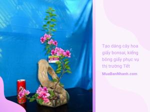 Làm giàu nhờ tạo dáng cây hoa giấy bonsai, kiểng bông giấy phục vụ thị trường Tết