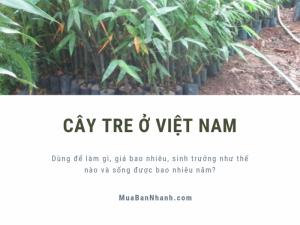 Cây tre ở Việt Nam: dùng để làm gì, giá bao nhiêu, sinh trưởng như thế nào và sống được bao nhiêu năm?